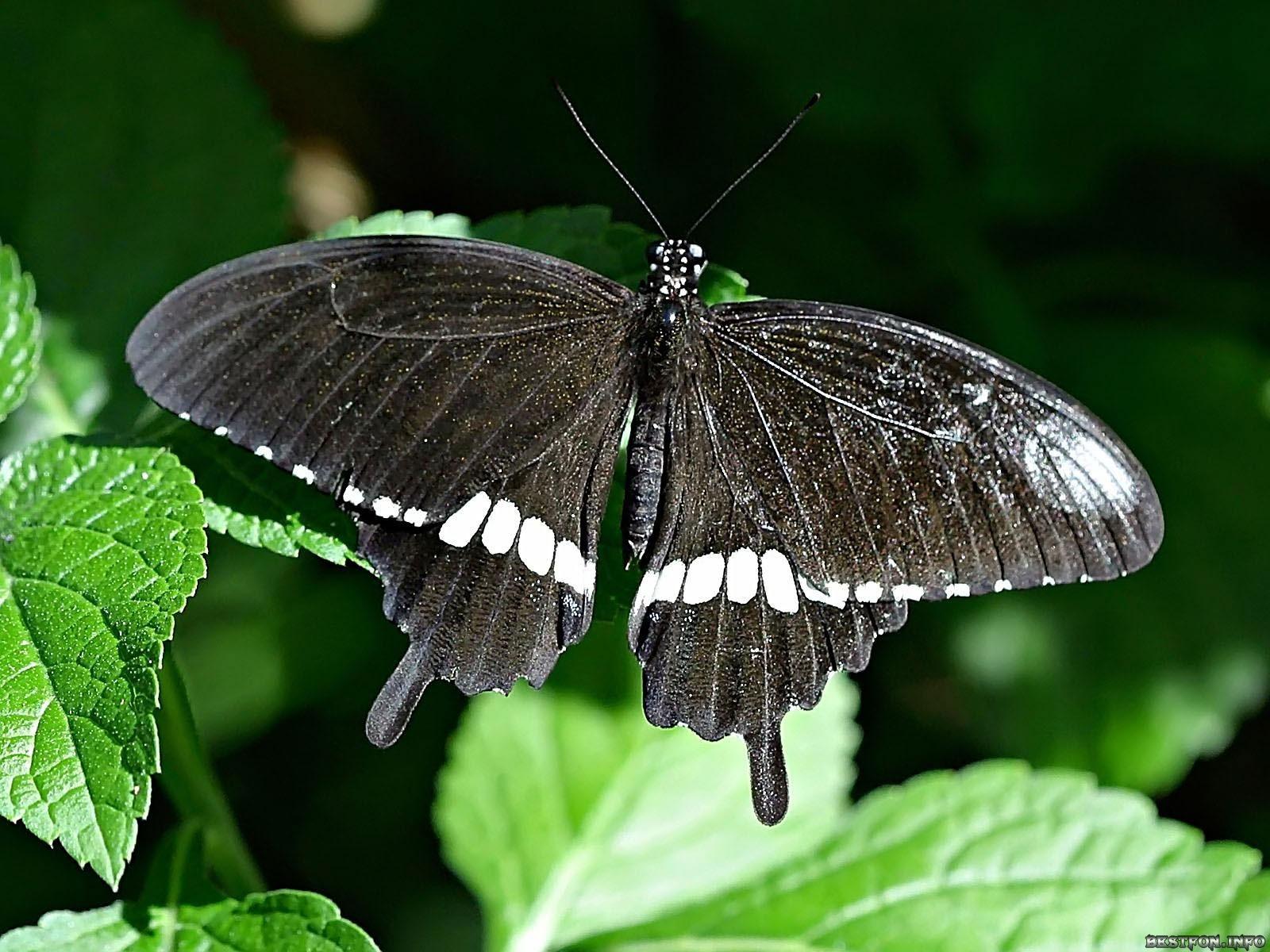 las mariposas y sus creencias para la buena suerte elena