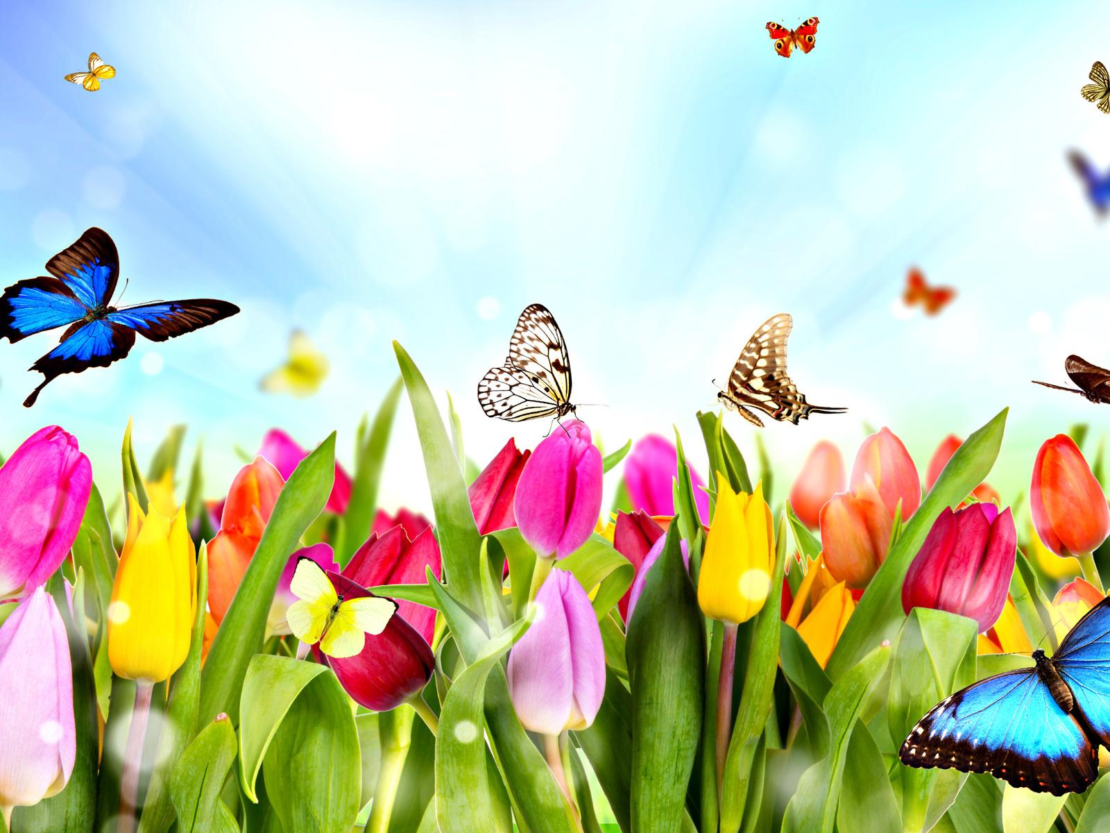 Imagenes mariposas top trolea a tus amigos con mariposas for Villas las mariposas