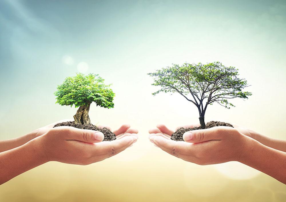 porqu es importante plantar rboles elena sevilla